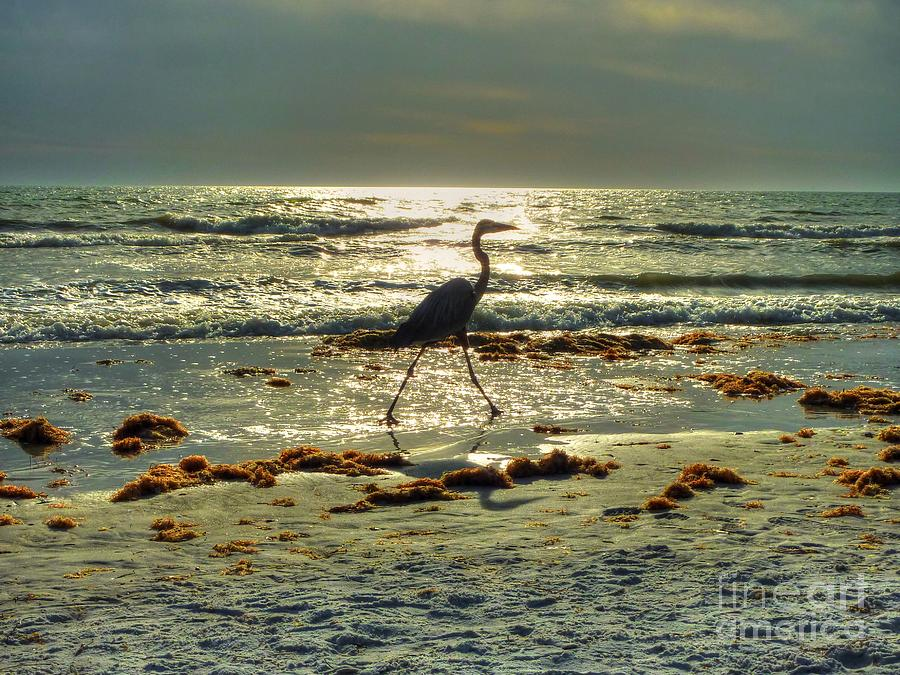 Heron Beachwalk Photograph  - Heron Beachwalk Fine Art Print