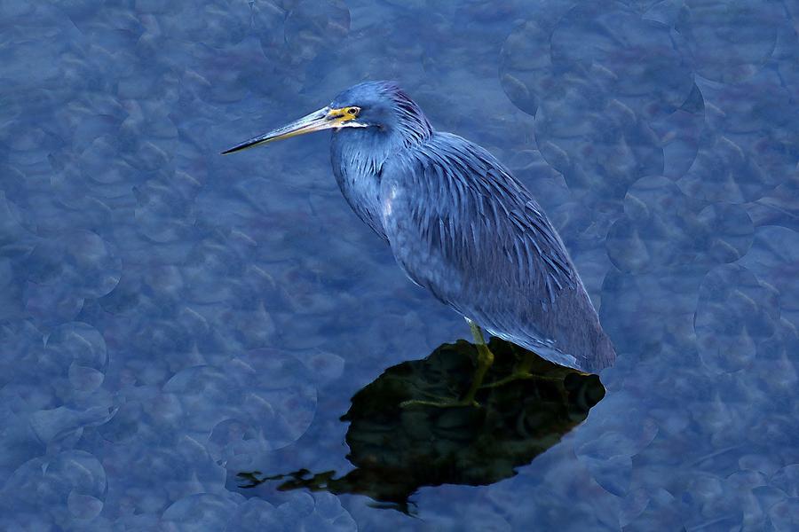 Heron Photograph - Heron by Paulette Thomas