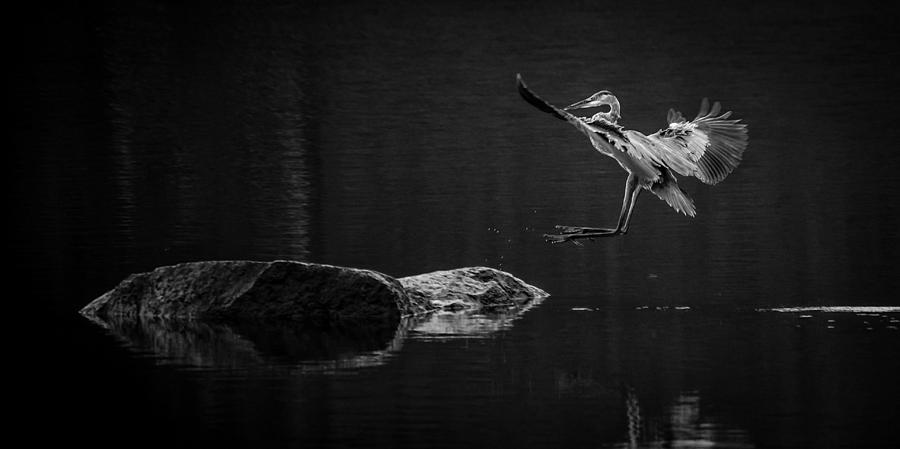 Herons Land Photograph  - Herons Land Fine Art Print