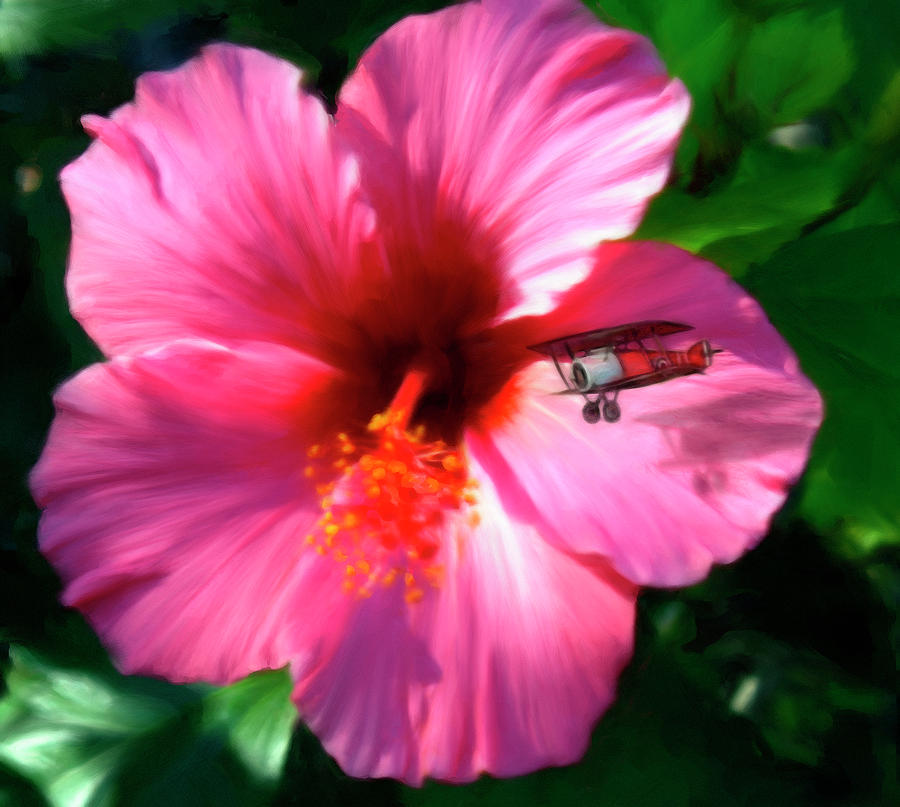 Hibiscus Fly-by Digital Art