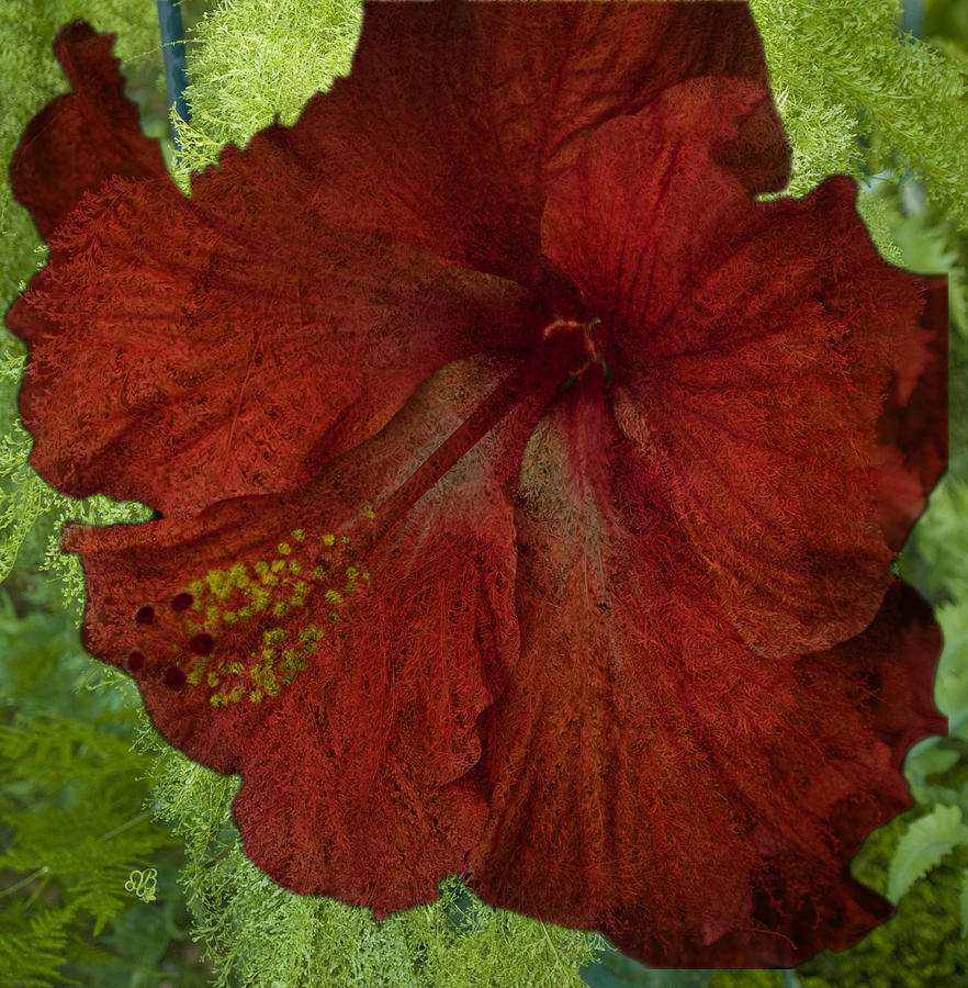 Hibiscus Plus Fern Photograph  - Hibiscus Plus Fern Fine Art Print