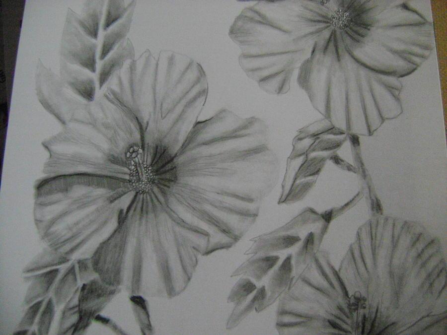 Hibiscus Drawing Stephanie Tripoli