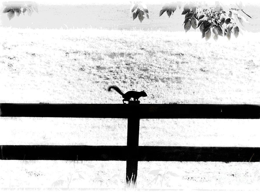 Hiding In The Shadows Photograph
