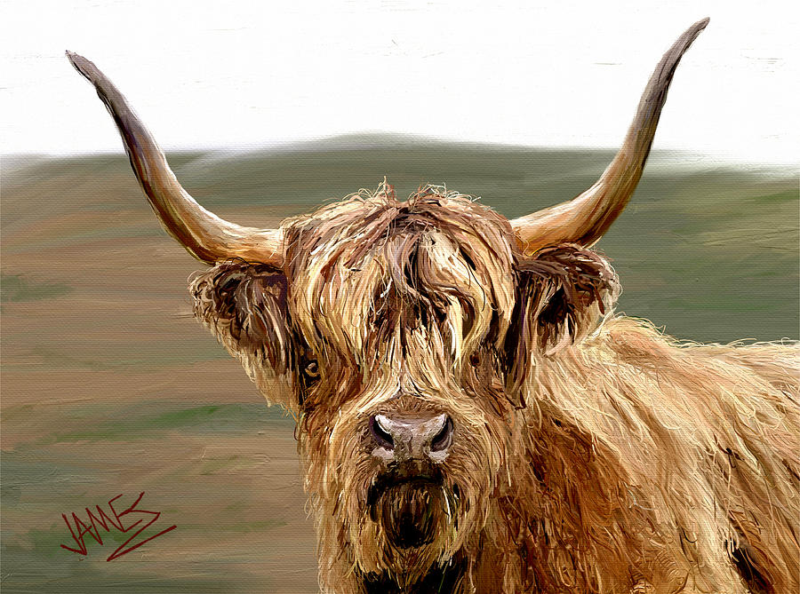 Highland Coo Painting