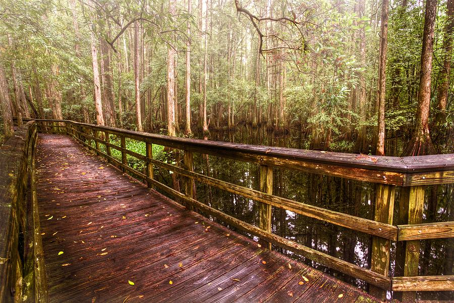 Highlands Hammock Photograph  - Highlands Hammock Fine Art Print