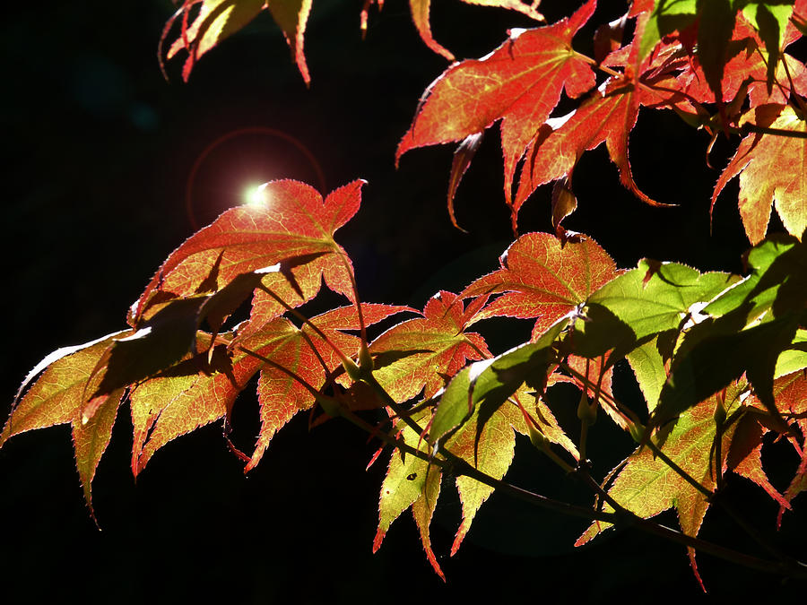 Highlighting The Season Of Fall 2 Photograph