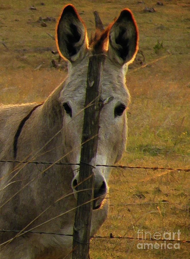 Donkey Photograph - Hill Country Camouflage by Joe Jake Pratt