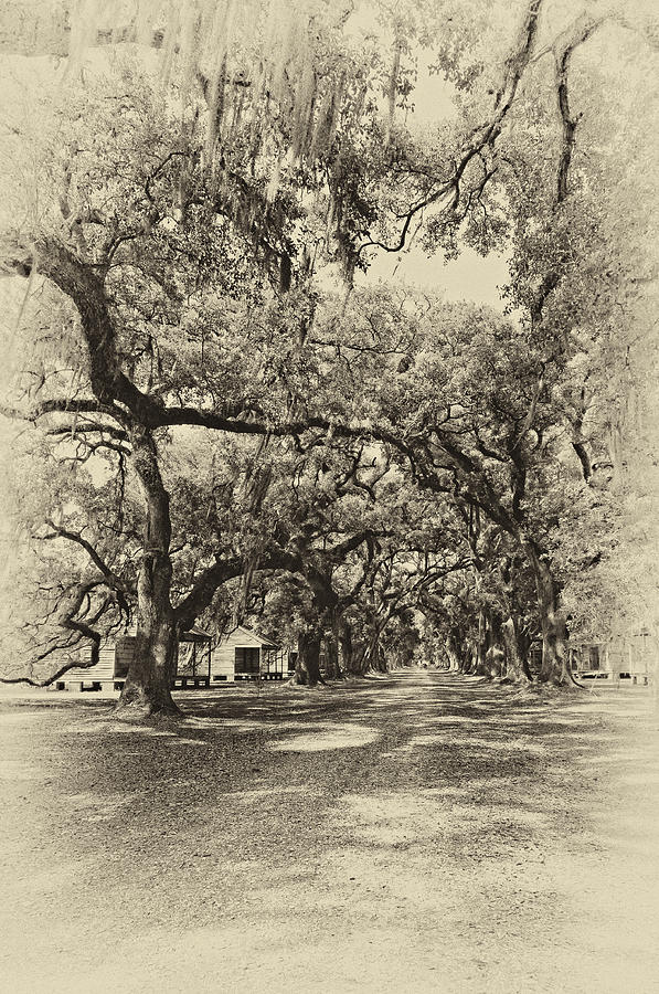 Historic Lane Antique Sepia Photograph  - Historic Lane Antique Sepia Fine Art Print