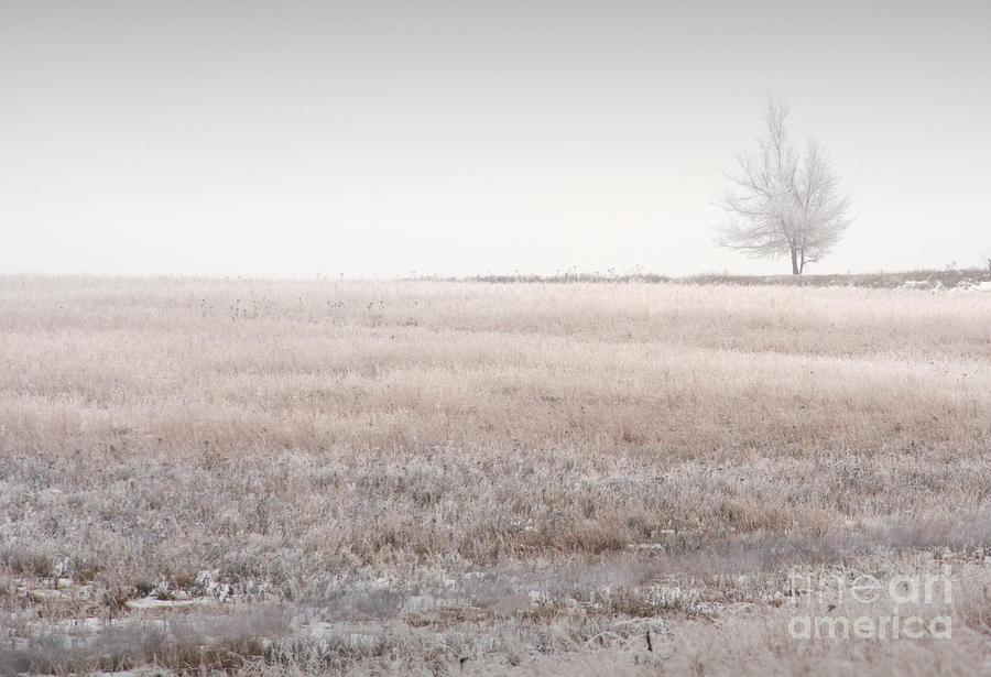 Hoarfrost Pasture Photograph
