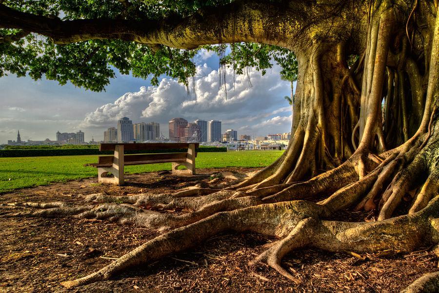 Hobbit Eyeview Photograph