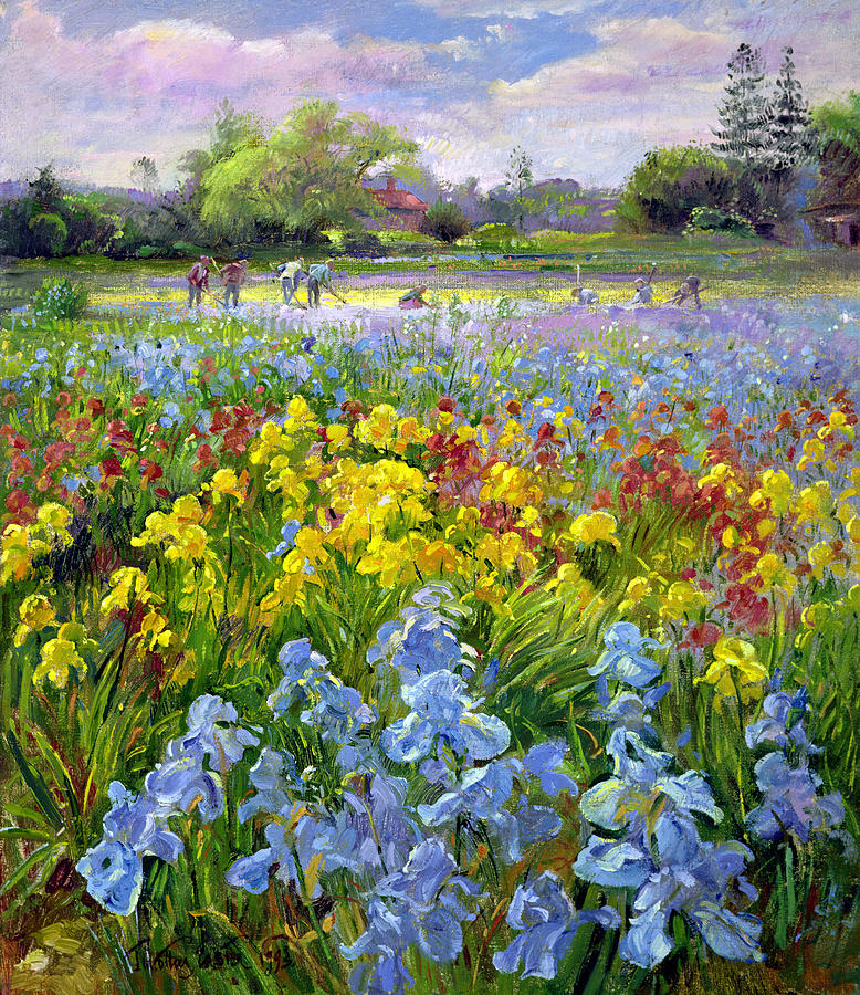 Landscape; Horticulture; Flowers; Market Gardening; Irises; Flower; Trees; Tree; Gardeners Painting - Hoeing Team And Iris Fields by Timothy Easton