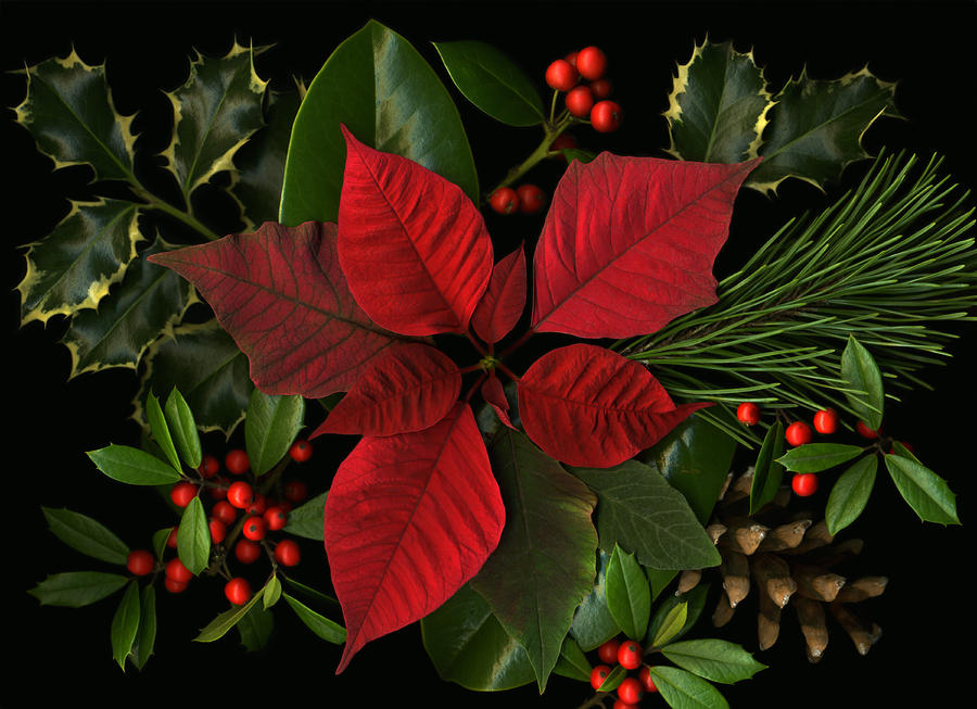 Holiday Greenery Photograph  - Holiday Greenery Fine Art Print