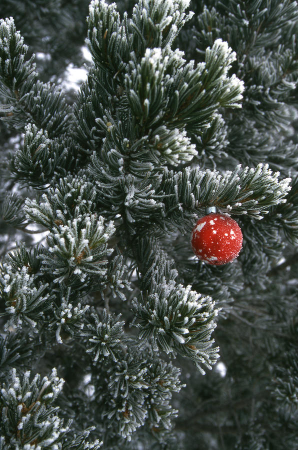 Holiday Ornament Hanging On Snow Dusted Photograph