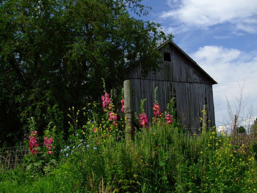 Hollyhock Barn Photograph