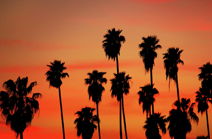 Hollywood Sunset Photograph  - Hollywood Sunset Fine Art Print