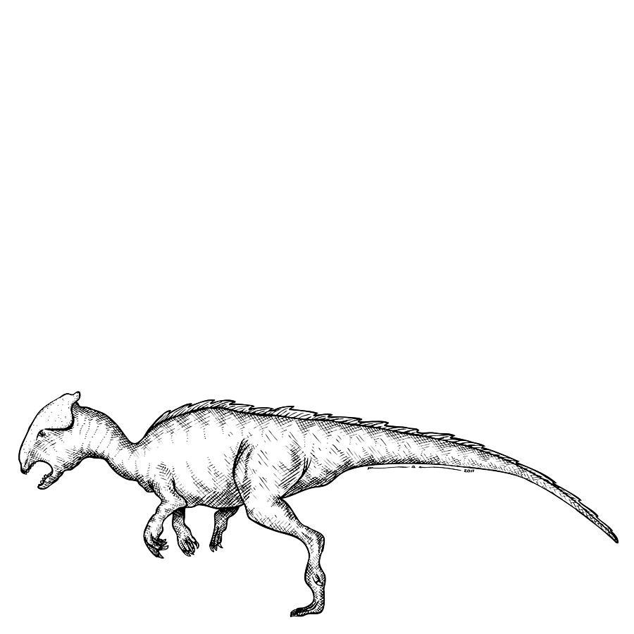Homalocephale - Dinosaur Drawing