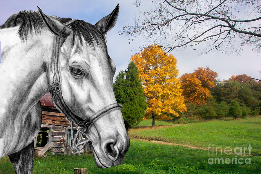 Home Again Photograph  - Home Again Fine Art Print