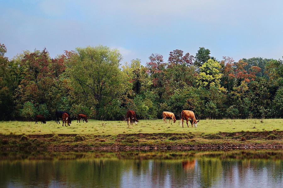 Ranch Photograph - Home On The Range by Susan Bordelon