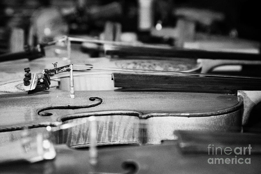 Homemade Handmade Violins Made Of Different Materials And Shape Photograph  - Homemade Handmade Violins Made Of Different Materials And Shape Fine Art Print