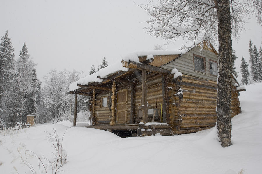 Homesteader Cabin In Bush Alaska is a photograph by Michael S. Quinton ...