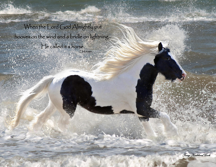 Hooves On The Wind Photograph
