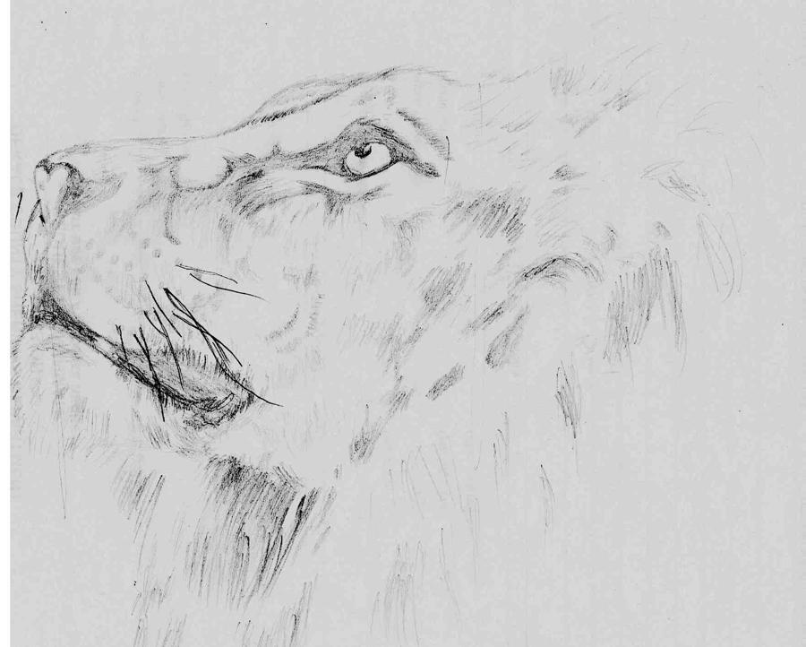Lion Drawing - Hope by Jeff Brown