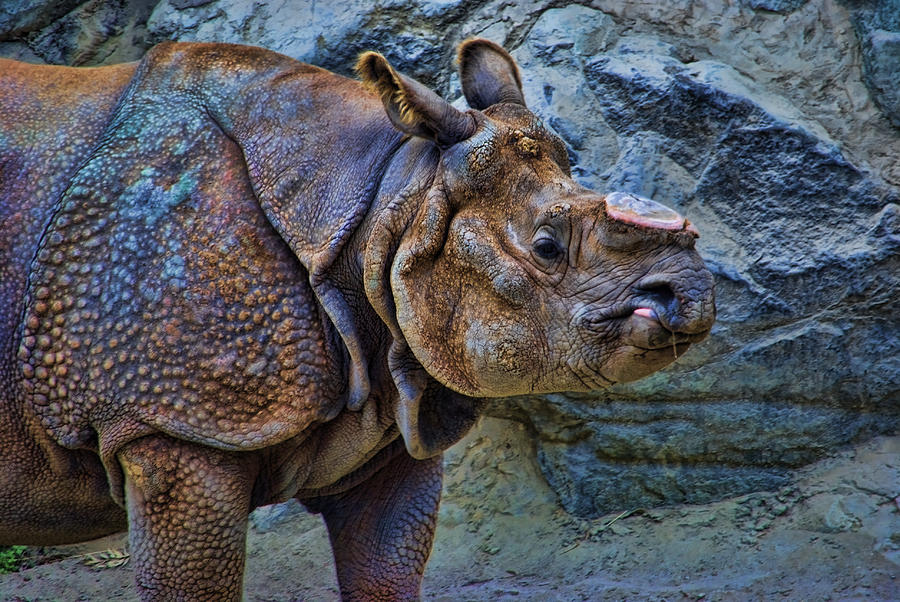 Hornless Rhino by David Theroff