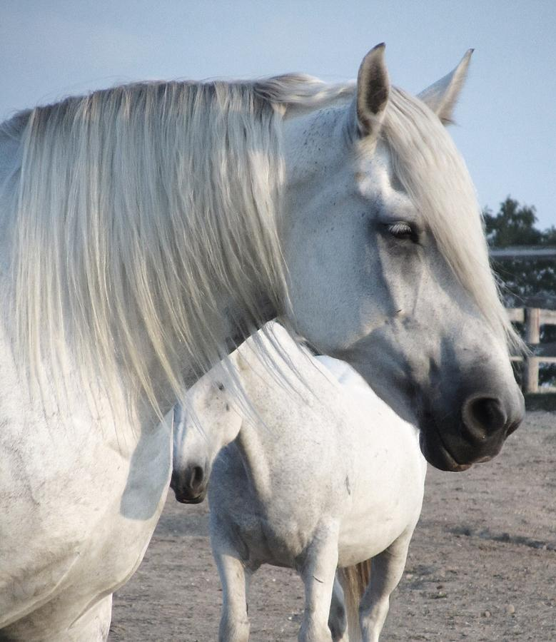 Horse-15 Photograph