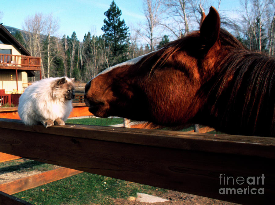 Horse And Cat Nuzzle Photograph