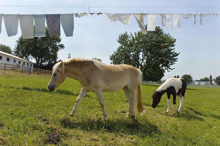 Horse And Laundry Photograph  - Horse And Laundry Fine Art Print