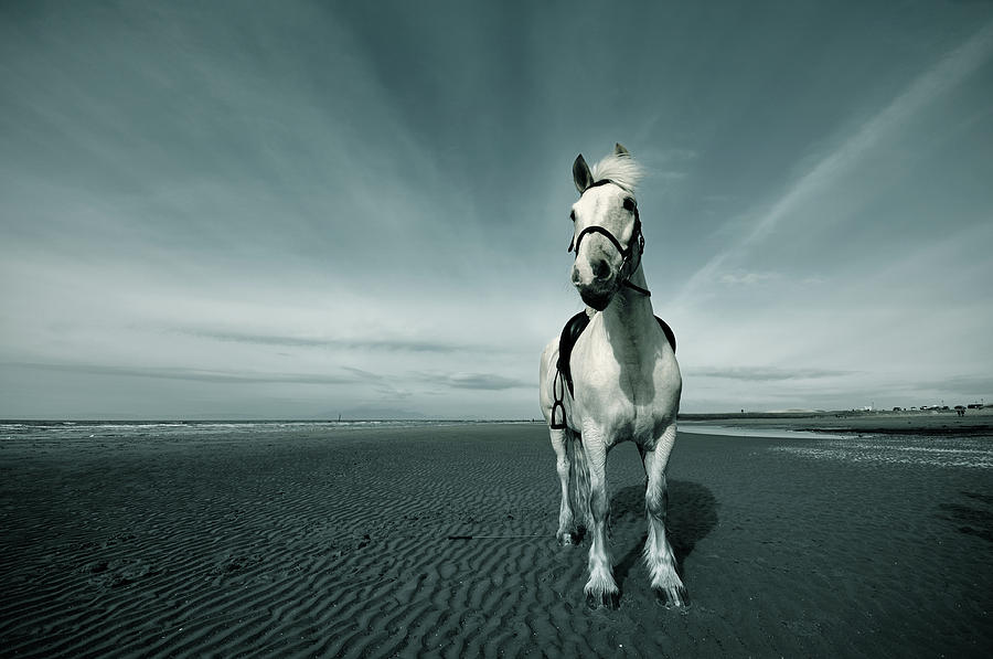 Horse At Irvine Beach Photograph  - Horse At Irvine Beach Fine Art Print