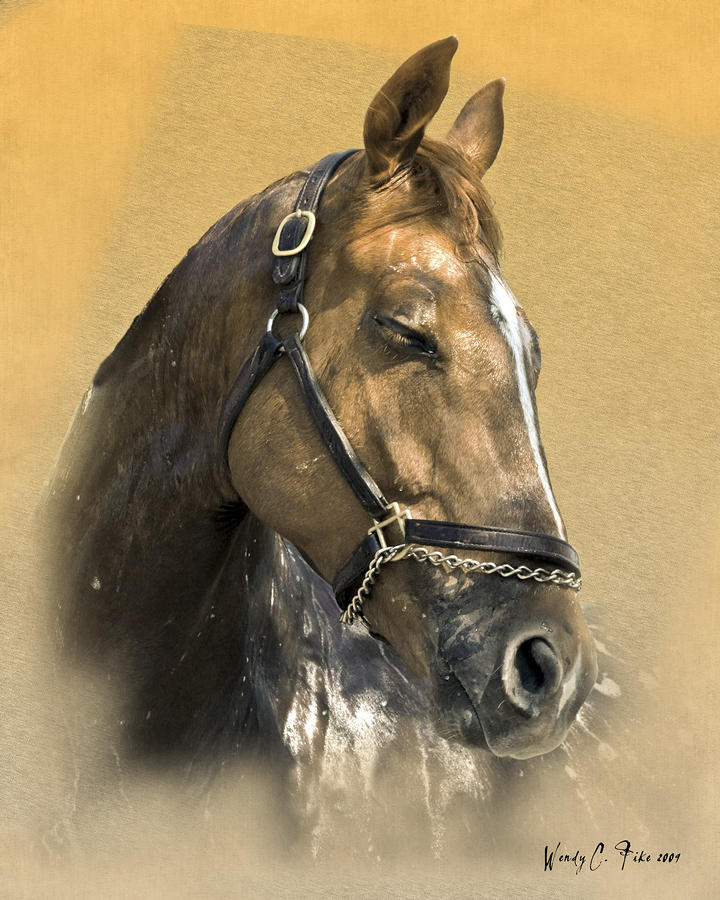 Horse Bath Digital Art  - Horse Bath Fine Art Print