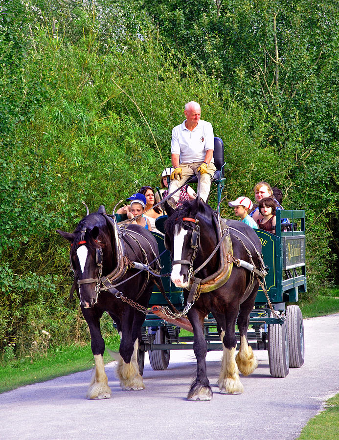 Horse-drawn Cart - Carsington Water Photograph  - Horse-drawn Cart - Carsington Water Fine Art Print