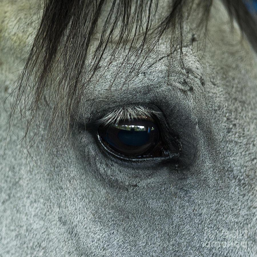 Horse Eye Photograph