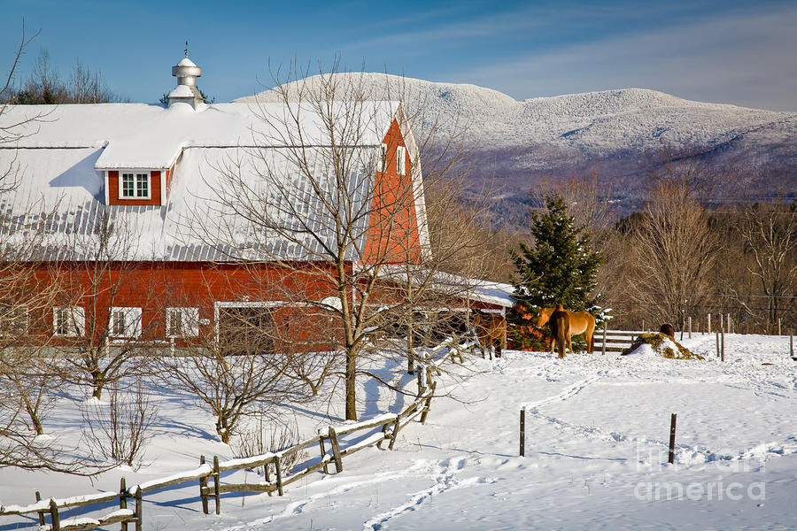 Horse Farm And Mount Mansfield Photograph