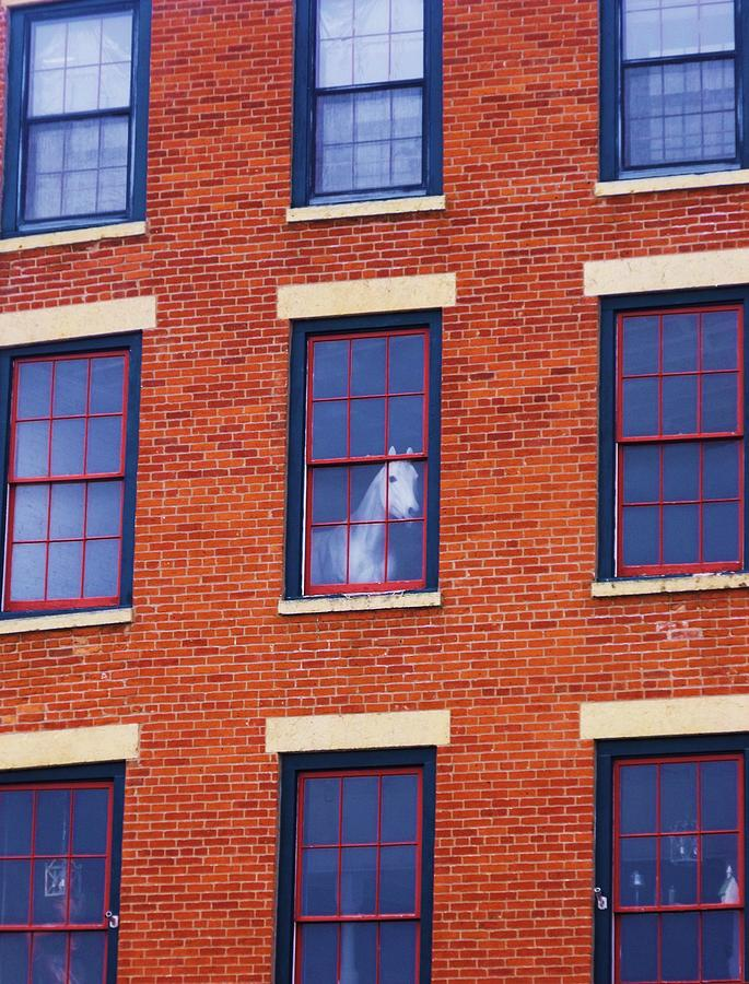 Horse In An Upstairs Window Photograph  - Horse In An Upstairs Window Fine Art Print