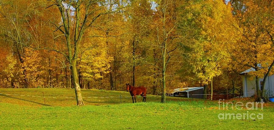 Horse In Autumn Photograph