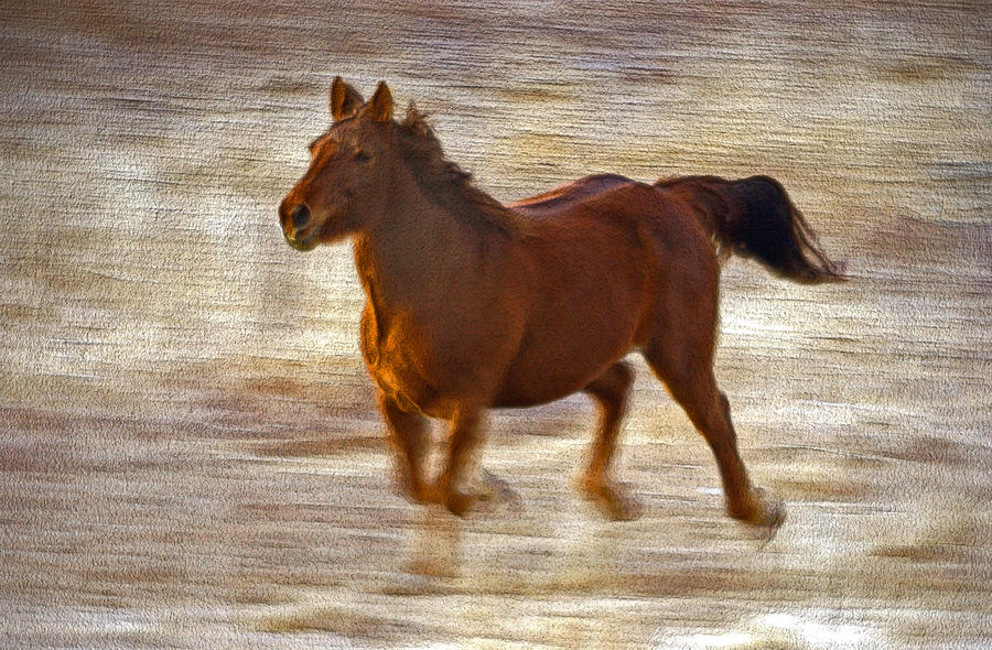 Horse In Motion Photograph