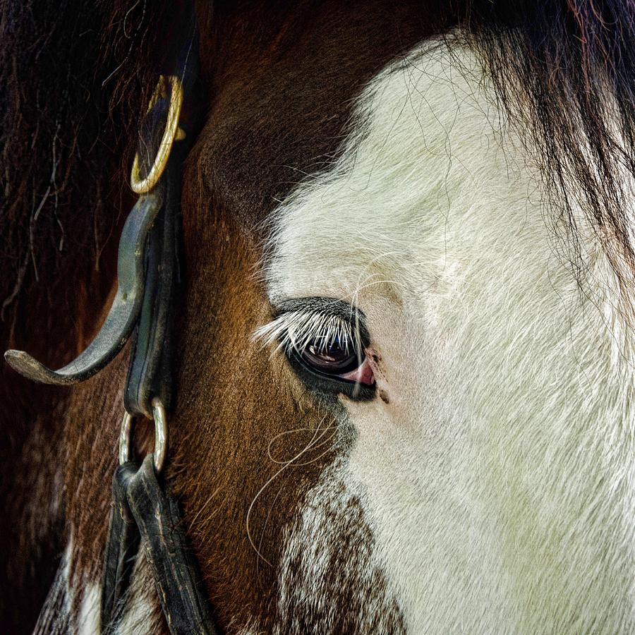 Horse Photograph