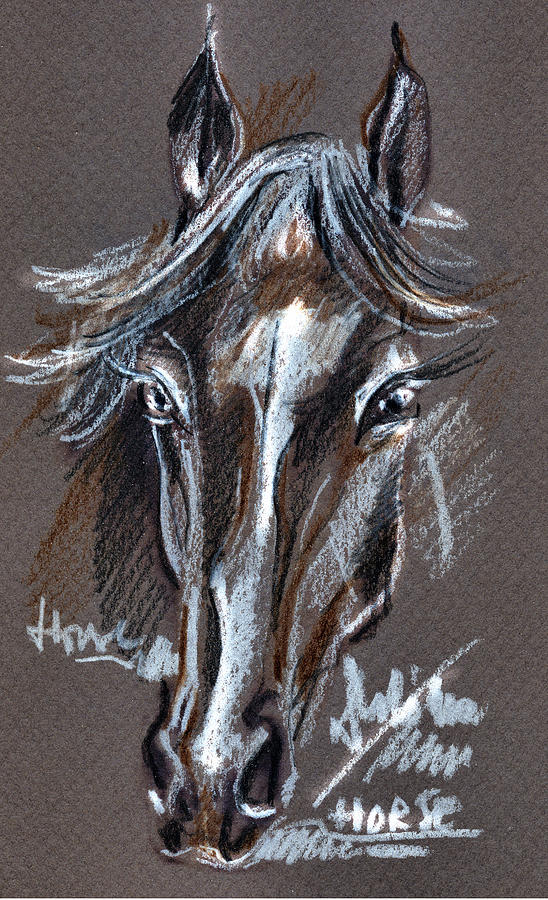 Horse Study Drawing