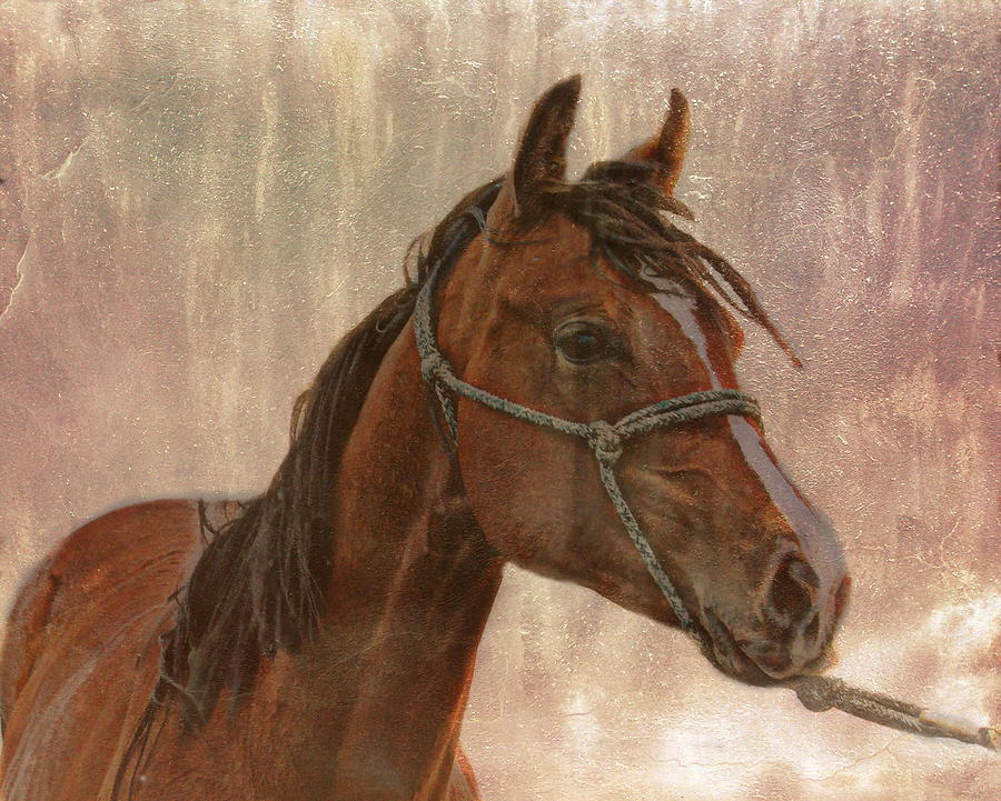 Horse With Halter Photograph  - Horse With Halter Fine Art Print
