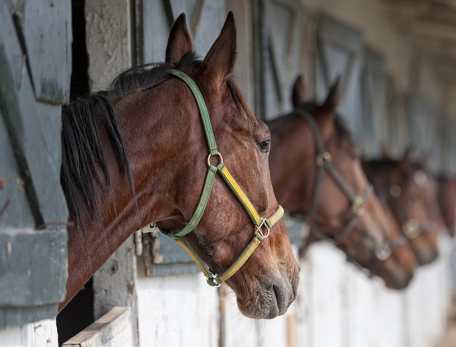 Horses For Sale Photograph