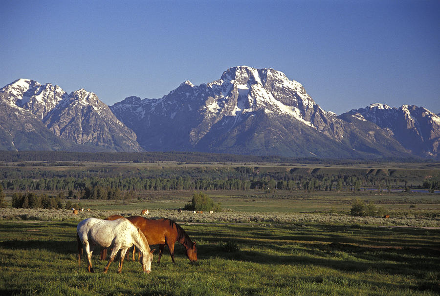 Horses Graze At Lost Creek Ranch Photograph