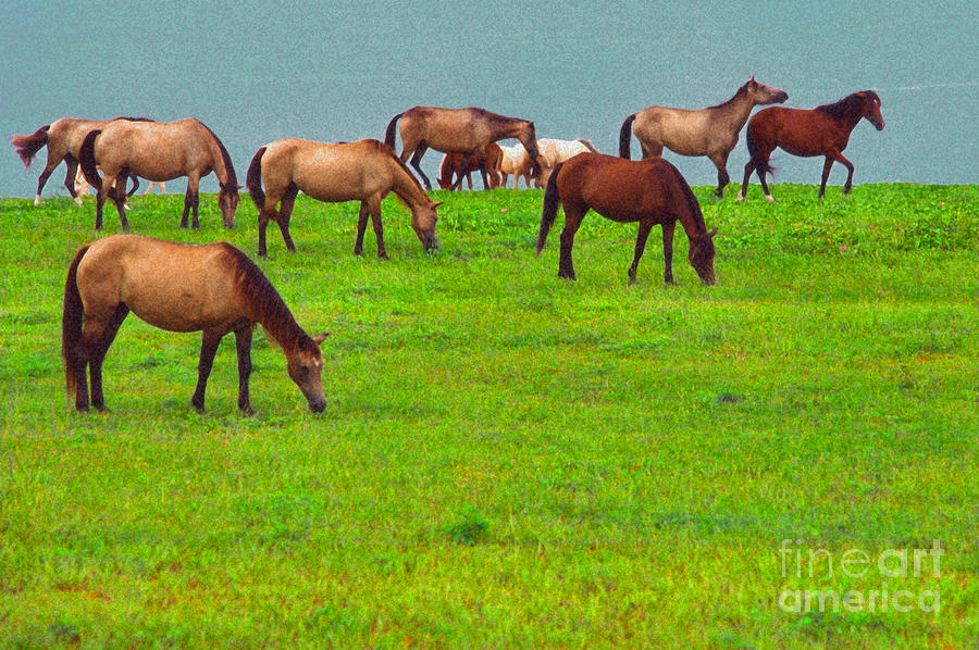 Horses Graze By Seaside Digital Art  - Horses Graze By Seaside Fine Art Print