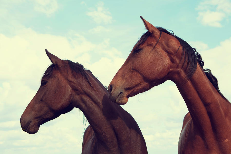 Horses Looking Sideways Photograph