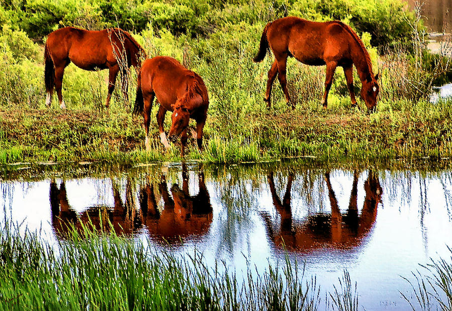 Horses Mirrored Photograph  - Horses Mirrored Fine Art Print