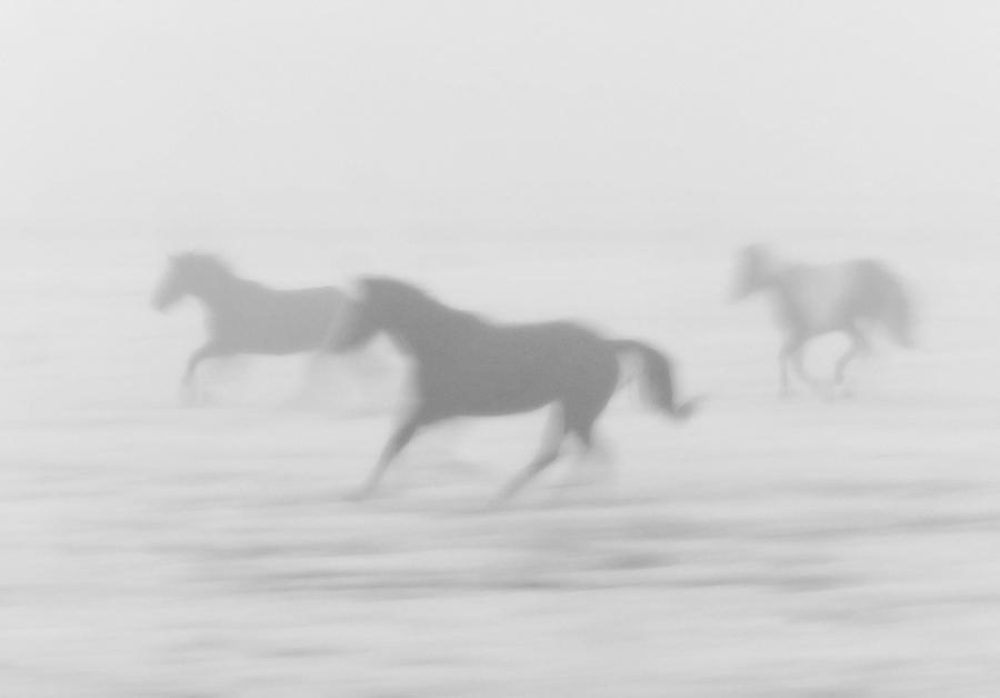 Horse Digital Art - Horses Running In The Fog Mist Saskatchewan Canada ...