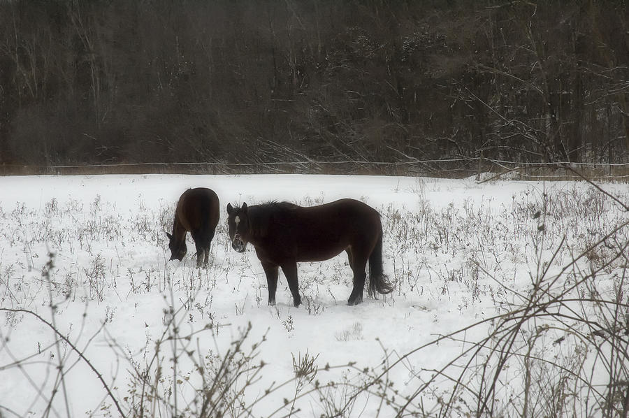 Horses Two Photograph