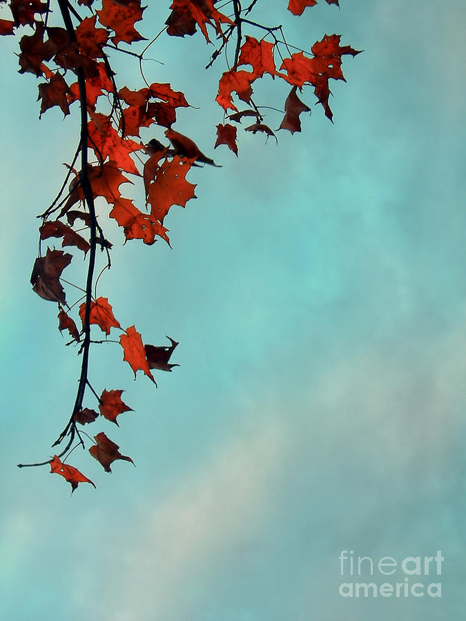 maple Tree Photograph - Hot And Cold by Aimelle