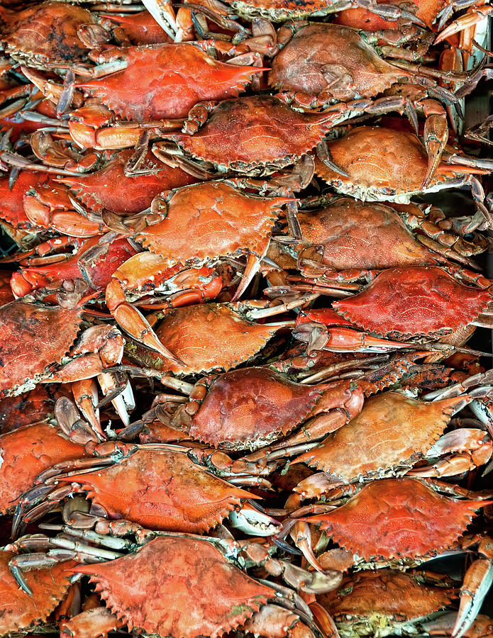 Hot Crabs Photograph  - Hot Crabs Fine Art Print